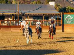 Polo in the Time of Covid